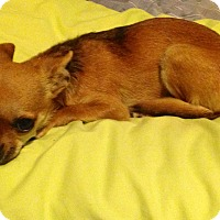 Adopt A Pet :: Shiloh - Poulsob, WA
