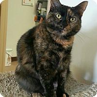 Adopt A Pet :: Tatiana - Chesapeake, VA