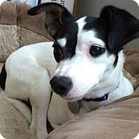 Adopt A Pet :: Stella - Knoxville, TN