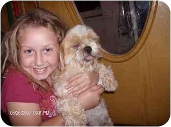 Shih Tzu Dog for adoption in Wauseon, Ohio - Friendly Freddie
