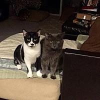 Adopt A Pet :: Klondike - Honolulu, HI