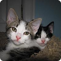 Adopt A Pet :: Samba (KY) - Trenton, NJ
