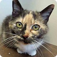 Adopt A Pet :: Callie - Oswego, IL