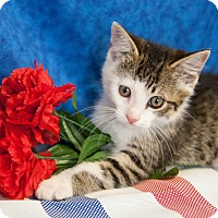 Adopt A Pet :: Ally The Cat - Muskegon, MI