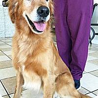 Adopt A Pet :: Blue - BIRMINGHAM, AL