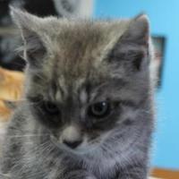 Adopt A Pet :: Carley - Robinson, IL