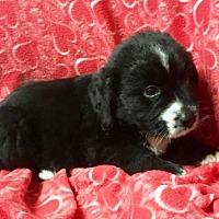Adopt A Pet :: Mystery Gang