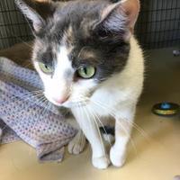 Adopt A Pet :: Margo - Fort Dodge, IA