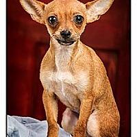 Adopt A Pet :: Gloria - Owensboro, KY