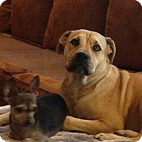 Adopt A Pet :: Fiona - Simi Valley, CA