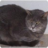 Adopt A Pet :: Percy - El Cajon, CA