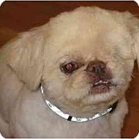 Adopt A Pet :: Petey-NY - Edmeston, NY