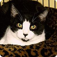Adopt A Pet :: Rex - Medway, MA