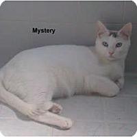 Adopt A Pet :: Mystery - Jacksonville, FL