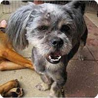 Adopt A Pet :: Bentley - Alexandria, VA