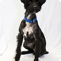 Adopt A Pet :: Roscoe - Bowie, MD