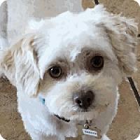 Adopt A Pet :: Dakota - La Costa, CA
