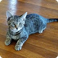 Adopt A Pet :: Rico - Cleveland, OH