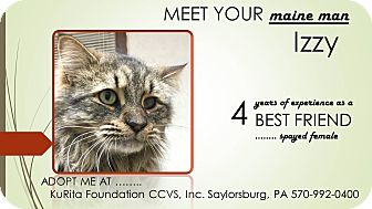 Maine Coon Cat for adoption in Saylorsburg, Pennsylvania - Izzy