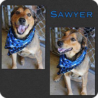 German Shepherd Dog/Foxhound Mix Dog for adoption in Brent, Alabama - Sawyer