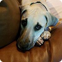 Adopt A Pet :: Rachel - Alpharetta, GA