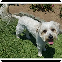 Adopt A Pet :: GOGI - Winchester, CA