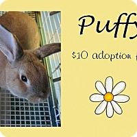 Adopt A Pet :: Puffy - Jefferson City, TN