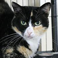 Adopt A Pet :: Sheila - Troy, IL