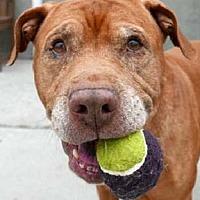 Adopt A Pet :: Tyke - Hillsboro, NH