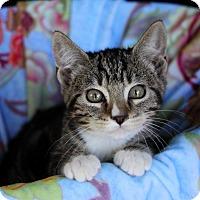 Adopt A Pet :: CARLY - Newport Beach, CA