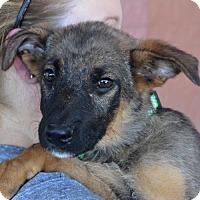 Adopt A Pet :: McFly - Greensboro, NC