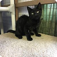 Adopt A Pet :: Rocky - Stanton, MI