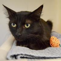 Adopt A Pet :: Hera - Buena Vista, CO