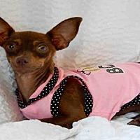 Adopt A Pet :: DORY - Upland, CA