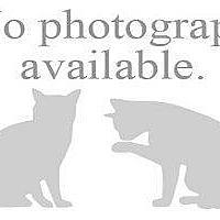 Adopt A Pet :: AJAY - Hampton, VA