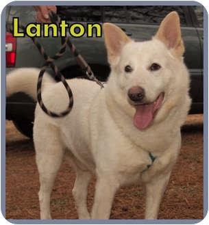 Shepherd (Unknown Type) Mix Dog for adoption in Aldie, Virginia - Lanton