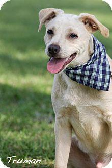 Terrier (Unknown Type, Medium)/Labrador Retriever Mix Dog for adoption in Wilmington, Delaware - Truman