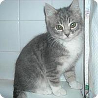 Adopt A Pet :: Sherman - Arlington, VA