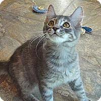 Adopt A Pet :: Deede - Escondido, CA