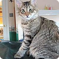 Adopt A Pet :: Harmony - Arlington, VA