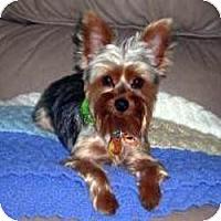 Adopt A Pet :: Max - Spring Hill, FL