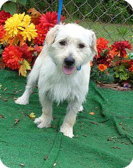 Terrier (Unknown Type, Small) Mix Dog for adoption in Marietta, Georgia - CASPER (R)