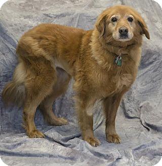 Golden Retriever Mix Dog for adoption in BIRMINGHAM, Alabama - Maise