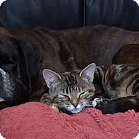 Adopt A Pet :: JP - Rigaud, QC