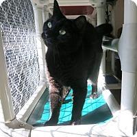 Adopt A Pet :: Beauty - Geneseo, IL