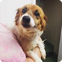 Adopt A Pet :: GINGER - Pompton Lakes, NJ