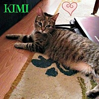 Adopt A Pet :: Kimi Female - Knoxville, TN