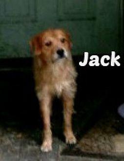 Terrier (Unknown Type, Medium) Mix Dog for adoption in Malvern, Arkansas - JACK