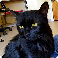 Adopt A Pet :: Zelda - Salisbury, MA