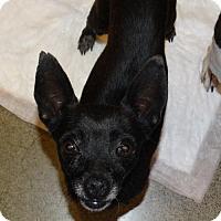 Adopt A Pet :: Evelyn - Tacoma, WA